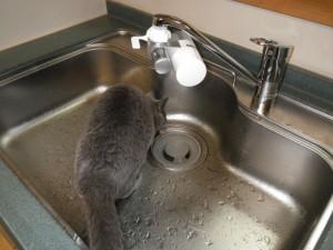 岡崎市 キッチン水栓取替工事 完了